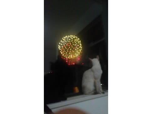 初めての花火だニャー!