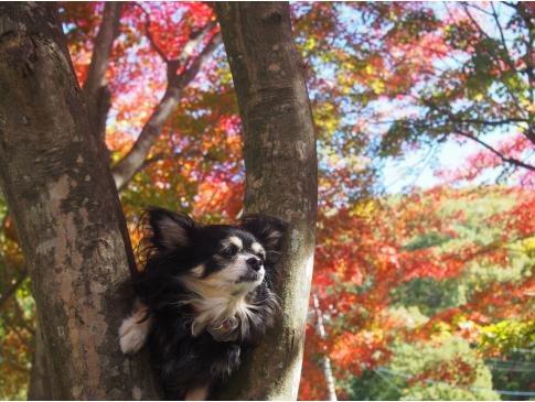 毎年楽しみにしてる紅葉狩り♪