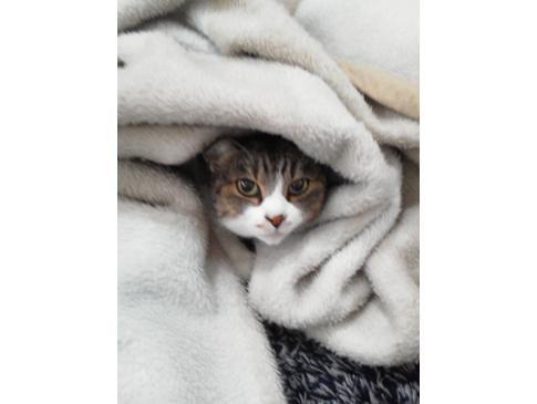 寒いにゃん