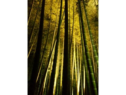 夜の高台寺part2