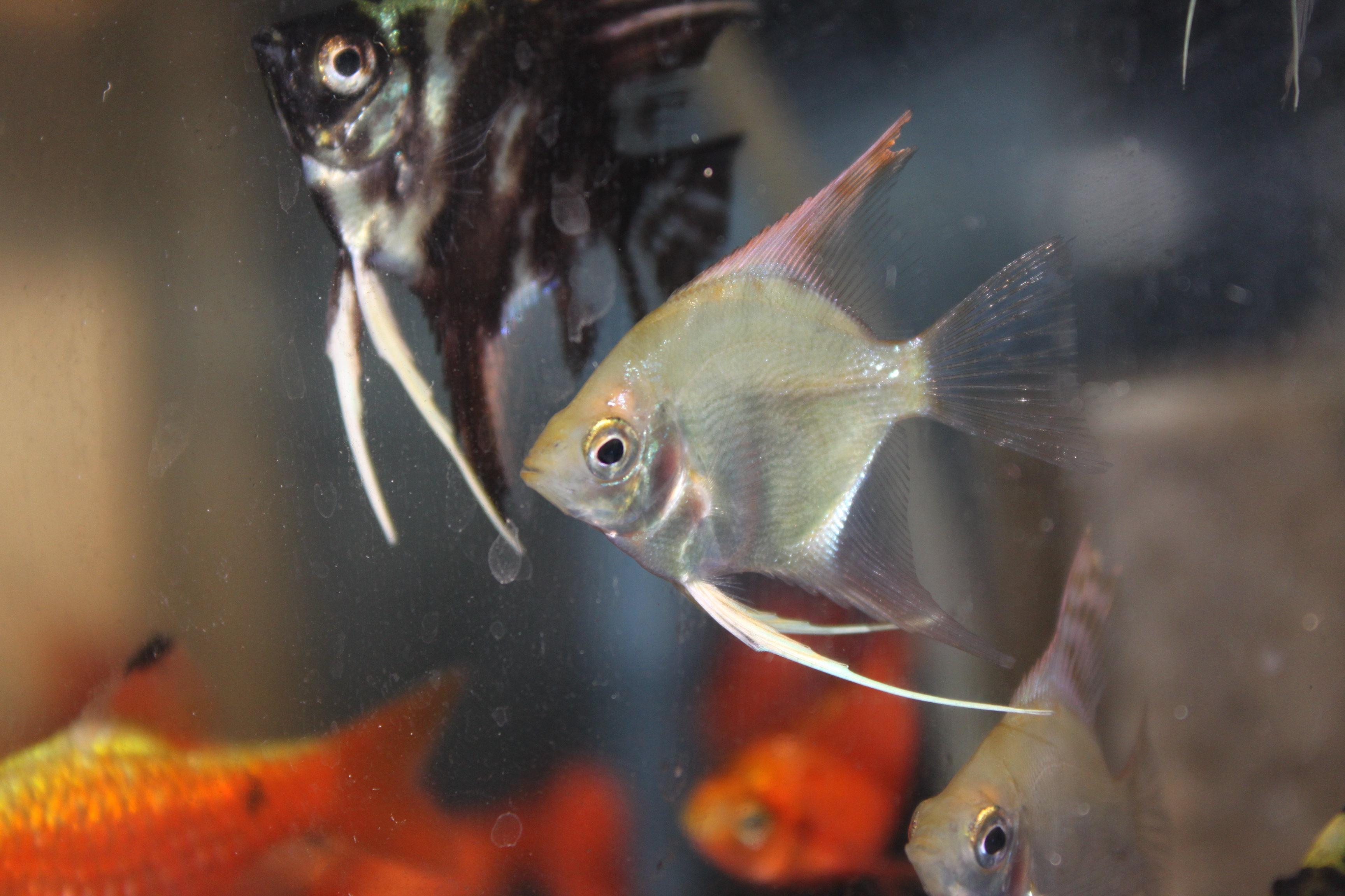 市川・船橋の熱帯魚・海水魚 アクアペットのお店 エラン