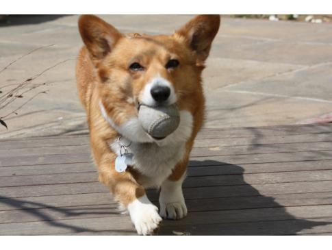 ボール遊びしたよ